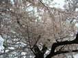 Weblog0804_043