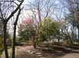 2010_0303_122300dscn1361