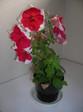 2011_0530_174024dscn2984